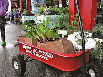 Herb Festival Returns at New Location