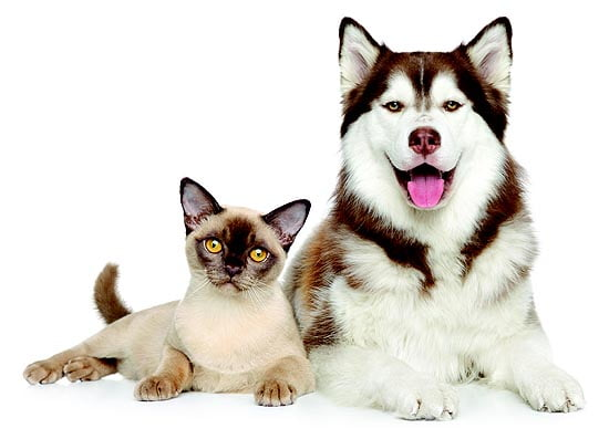 Your Pet and COVID-19